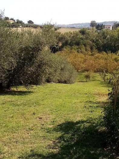 Terreno agricolo in Vendita - Senigallia | euro 100000